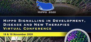 hippo-2020