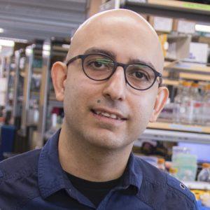 Dr. Mo Ebrahimkhani Awarded NSF Grant for work in Human Liver Organoids